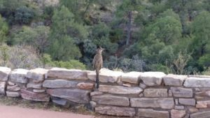 Wildlife adventures in Big Bend with Every Road A Story